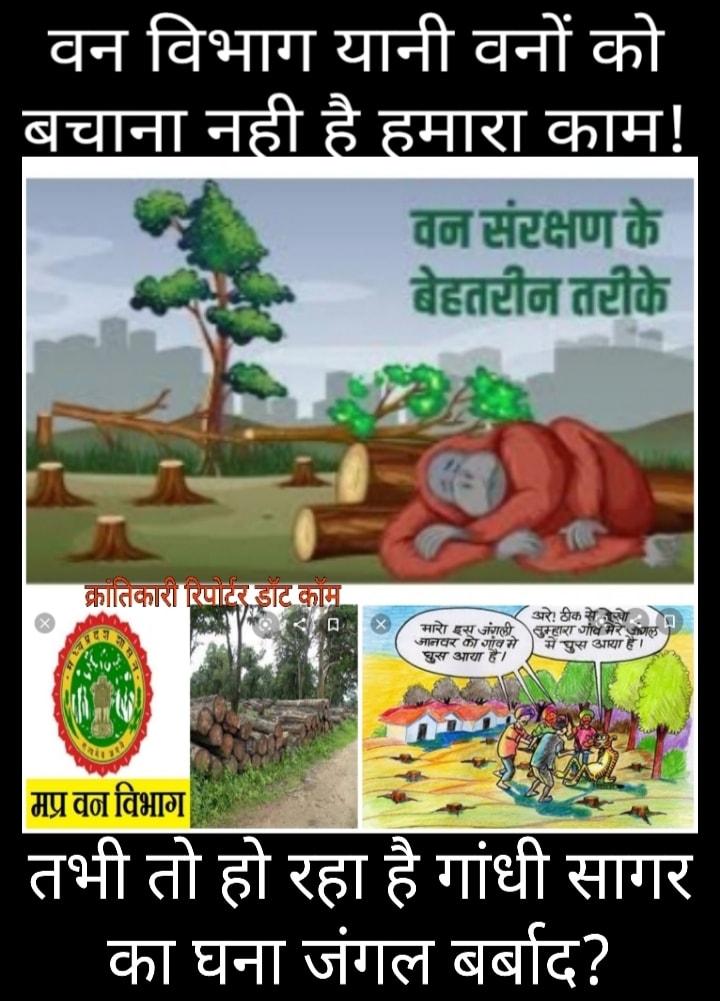 #वनों और वन्य जीवों को बचाने में नाकाम... मंदसौर जिले का वन विभाग...?