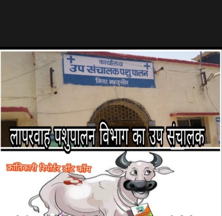 #भ्रष्टचारियो के आगे चुनाव आयोग भी बोना साबित हुआ... क्योंकि पशुपालन विभाग के #कारिंदों का राजनीतिक रिश्ता बड़ा गहरा दिख रहा...!