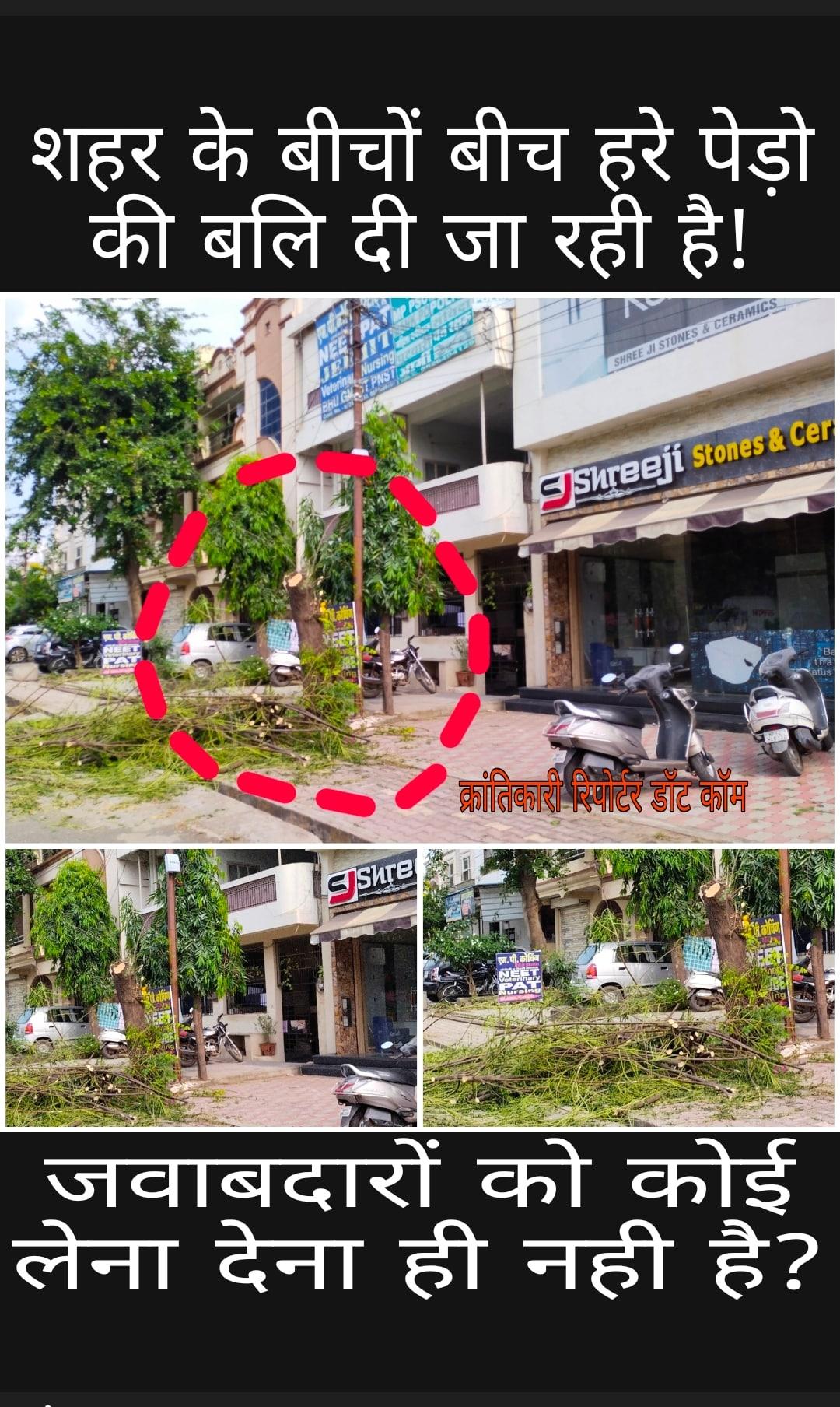 #लॉ कॉलेज के सामने श्रीजी स्टोन वाले ने हरा भरा पेड़ कटवा दिया... सूचना के बाद भी कोई जवाबदार मौके पर तक नही गया...?